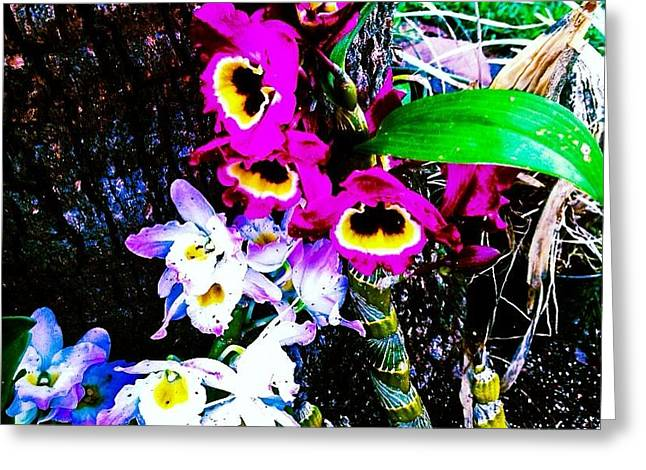 Carbon Monoxide Greeting Cards - Fauna Greeting Card by Kryztina Spence