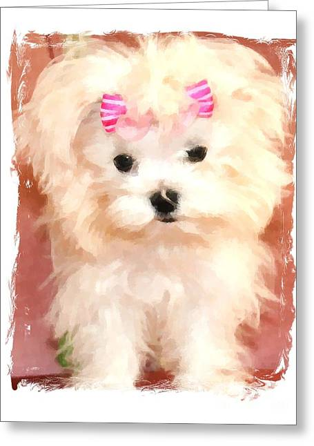 Toy Maltese Greeting Cards - Faux Maltese BELLA Greeting Card by Margaret Newcomb
