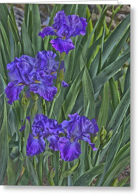 Faux Painted Irises Greeting Card by Penny Lisowski