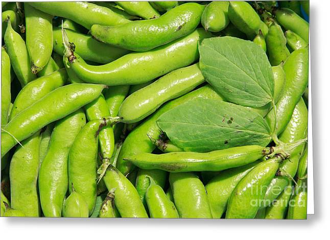 Green Beans Greeting Cards - Fava bean pods Greeting Card by Gaspar Avila
