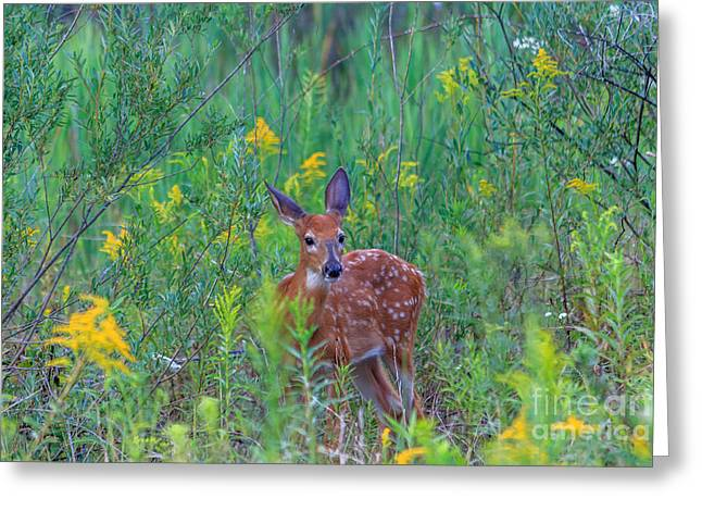 Red Green Black Pyrography Greeting Cards - Fawn in Golden Rod Greeting Card by Rebecca Brooks