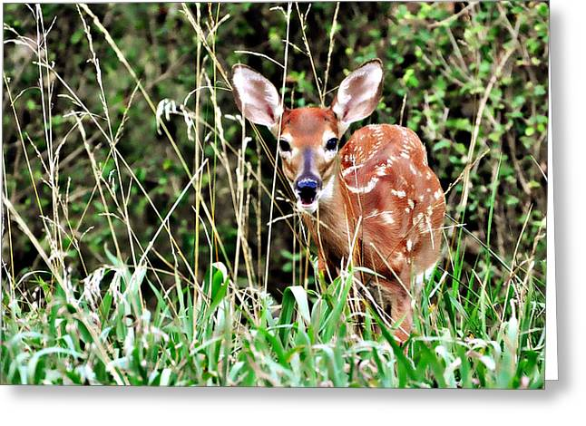Fawn In The Grass Greeting Card by Marty Koch