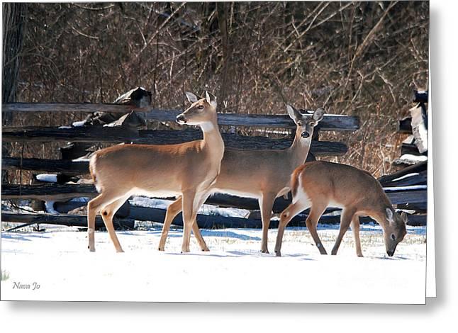 Pea Ridge Greeting Cards - Fawn Loving Snow Greeting Card by Nava  Thompson