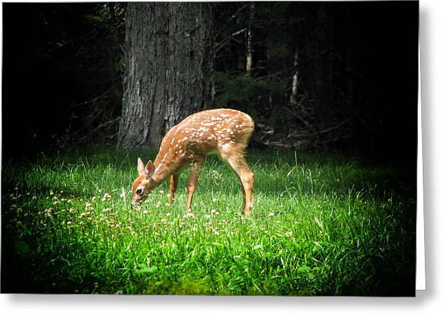 Maine Landscape Greeting Cards - Fawn of the Forest Greeting Card by Mountain Dreams