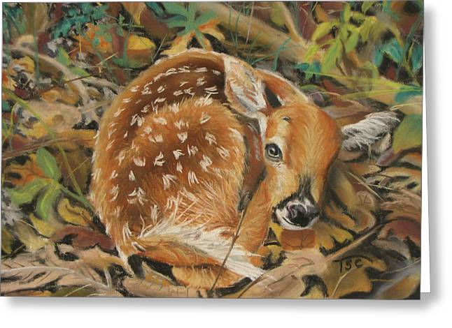 White Tail Pastels Greeting Cards - Fawn Greeting Card by Tammy Crawford