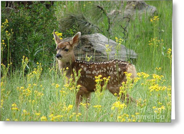 Rainbow Trout Greeting Cards - Fawn with spots. Greeting Card by Phyllis Ezit