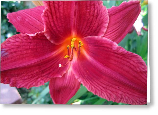Close Focus Nature Scene Greeting Cards - Fearless Greeting Card by Mike Podhorzer