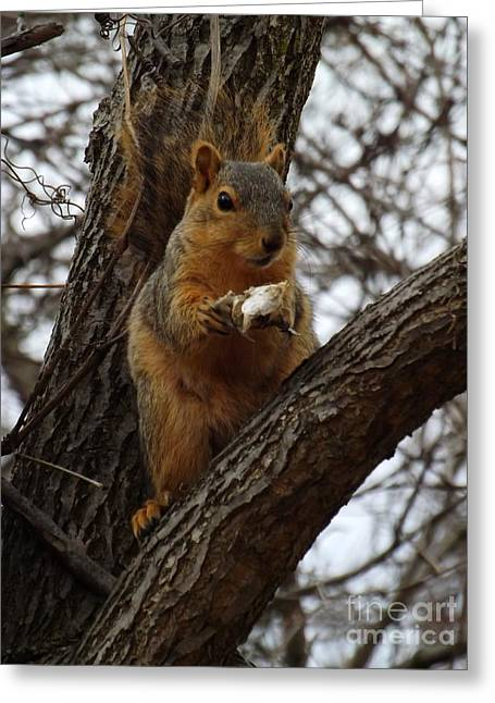 Fox Squirrel Greeting Cards - Feasting on Fish Fox Squirrel Greeting Card by Sara  Raber