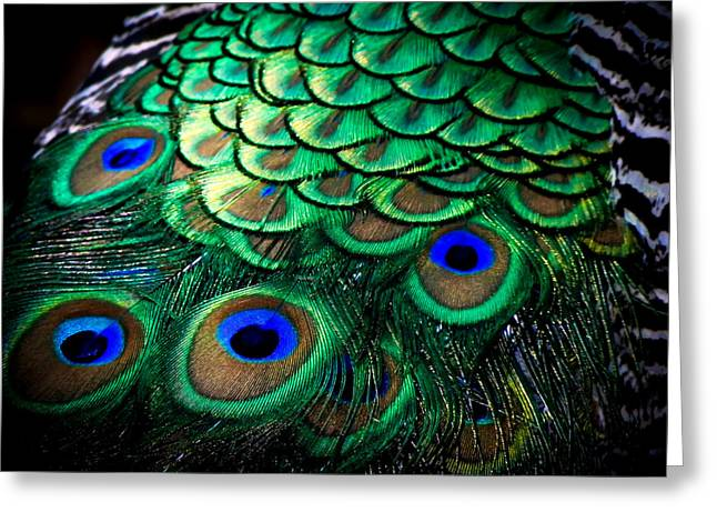Blue And Green Greeting Cards - Feather Abstract Greeting Card by Karen Wiles