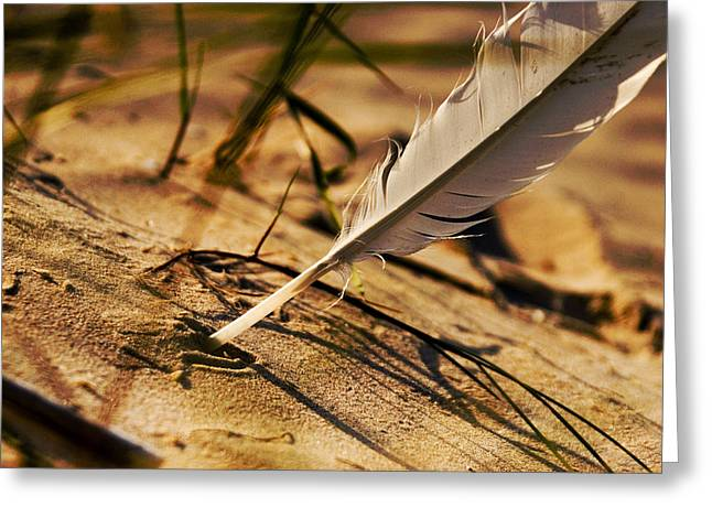 Aquatic Pyrography Greeting Cards - Feather And Sand Greeting Card by Raimond Klavins