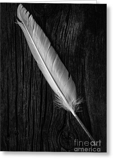 Geese Art Greeting Cards - Feather Greeting Card by Edward Fielding