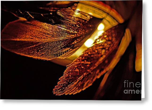 Bronce Greeting Cards - Feather In The Back Light Greeting Card by Eva-Maria Di Bella