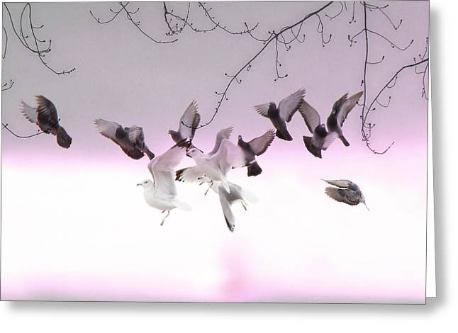 Feral Pigeon Greeting Cards - Feather Light Greeting Card by Gothicolors Donna Snyder