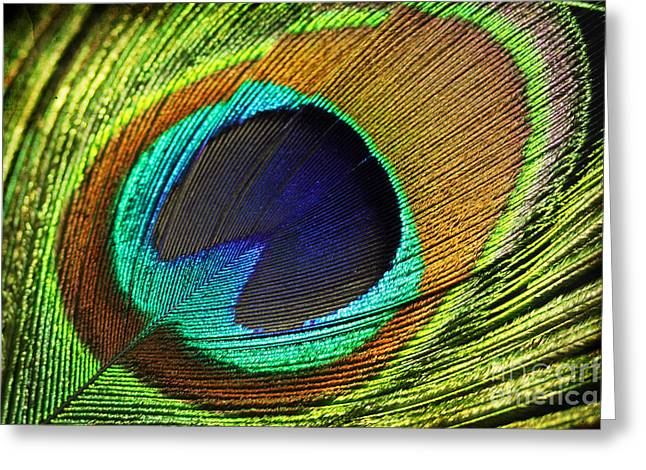 Fed Digital Art Greeting Cards - Feather Greeting Card by Mark Ashkenazi