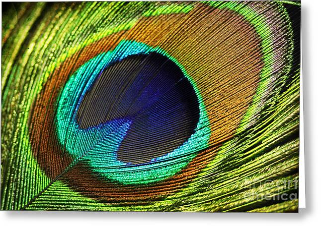 Feather Greeting Card by Mark Ashkenazi