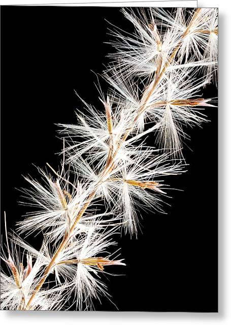 Ornamental Greeting Cards - Feather Reed Grass Greeting Card by Jim Hughes