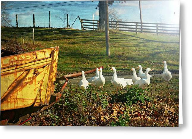 Warwick Greeting Cards - Feathered Farmers Greeting Card by Diana Angstadt
