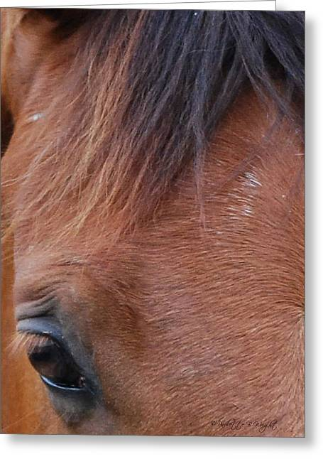 Beautiful Equine Photos Fine Art Greeting Cards - Feathered Forehead Greeting Card by Paulette B Wright