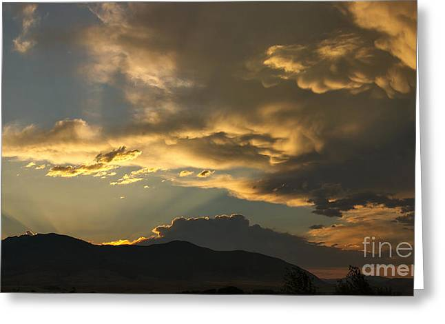 Feathers Of Sunlight Greeting Card by Charles Kozierok