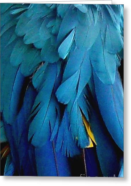 Gold Buyer Greeting Cards - Feathers of the Macaw Parrot Greeting Card by Gail Matthews