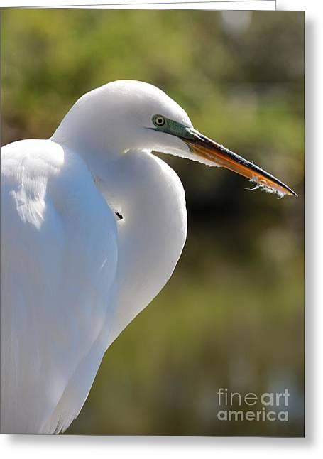 Feathery Great Egret Beak Greeting Card by Carol Groenen