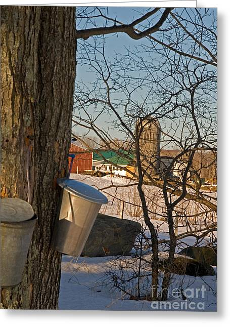 Maine Farms Greeting Cards - February in Maine Greeting Card by Alana Ranney