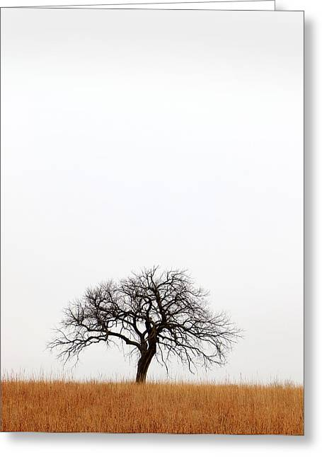 Sante Fe Trail Greeting Cards - February Tree Greeting Card by Christopher McKenzie