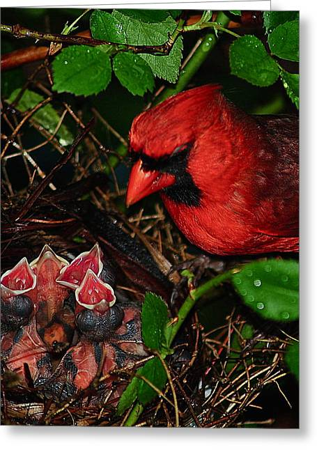 Hatching Greeting Cards - Feed Me Daddy Greeting Card by Frozen in Time Fine Art Photography