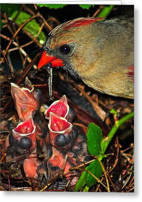 Feeds Chicks Greeting Cards - Feed Me Mommy Greeting Card by Frozen in Time Fine Art Photography