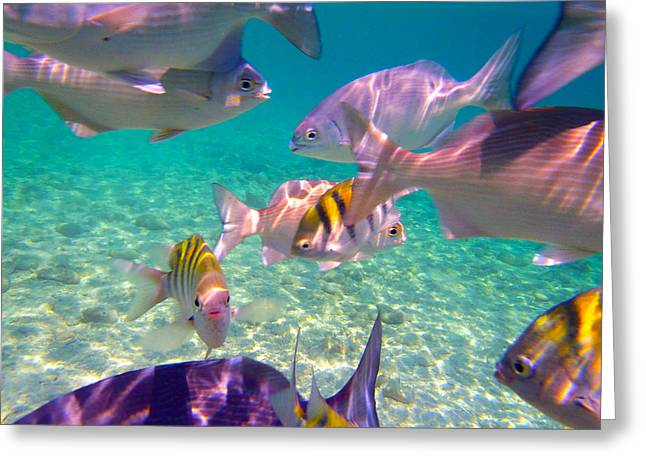 Reef Fish Photographs Greeting Cards - Feed time Greeting Card by Carey Chen