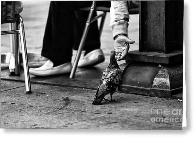 Feeding Birds Greeting Cards - Feeding a Pigeon mono Greeting Card by John Rizzuto