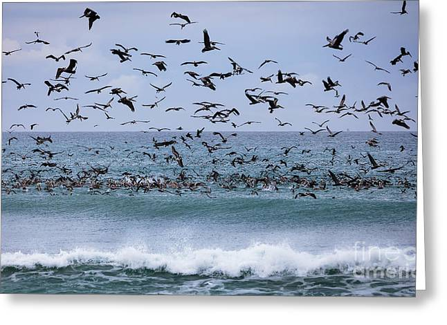 Diving In California Greeting Cards - Feeding Frenzy Greeting Card by David Millenheft