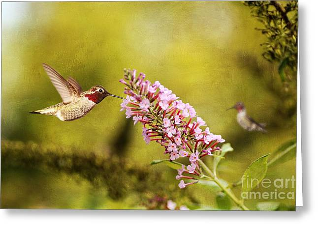 Butterfly In Flight Greeting Cards - Feeding Hummer Greeting Card by Darren Fisher