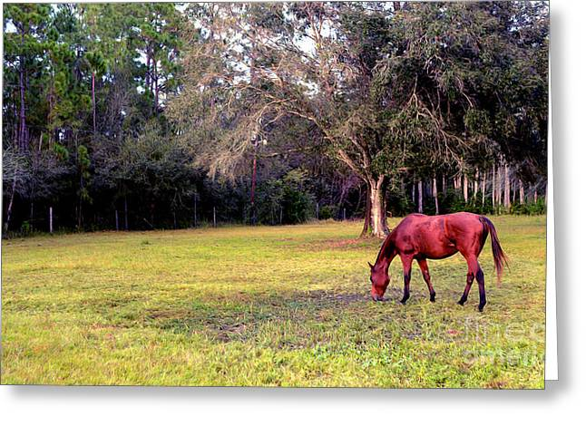 Horse Farm Greeting Cards - Feeding in the Pasture Greeting Card by Jon Neidert