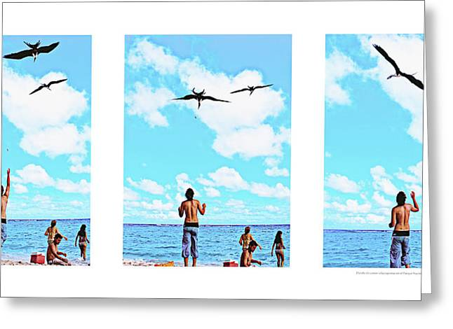 Alejandro Greeting Cards - Feeding sea birds Greeting Card by Alejandro Ascanio