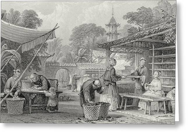 Drying Rack Greeting Cards - Feeding Silkworms And Sorting Cocoons Greeting Card by Thomas Allom
