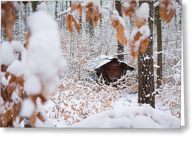 Winterly Forest Greeting Cards - Feeding site in the forest in winter  Greeting Card by Matthias Hauser
