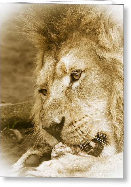 Lions Greeting Cards - Feeding Time  Greeting Card by Darren Wilkes