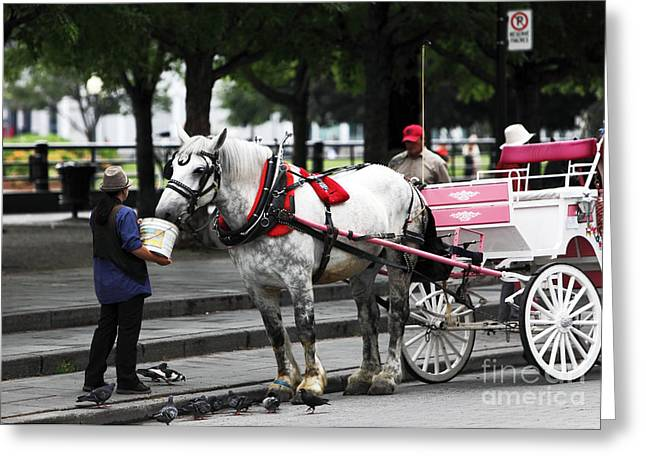 Places In Montreal Greeting Cards - Feeding Time in Montreal Greeting Card by John Rizzuto