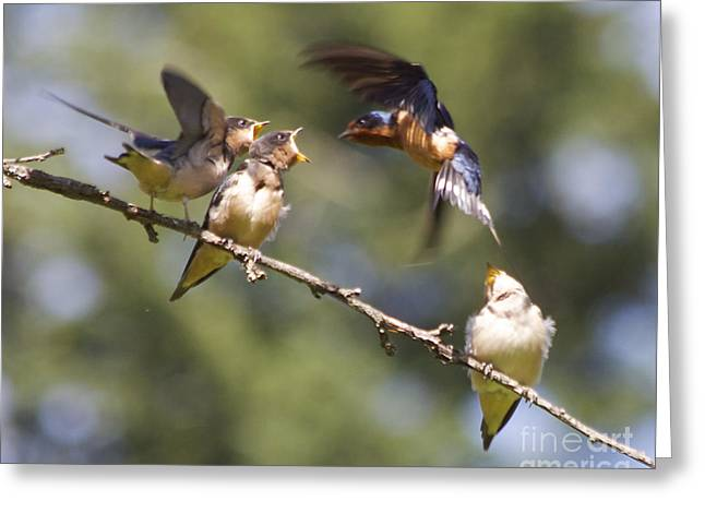 Feeding Time Greeting Card by Tracey Levine
