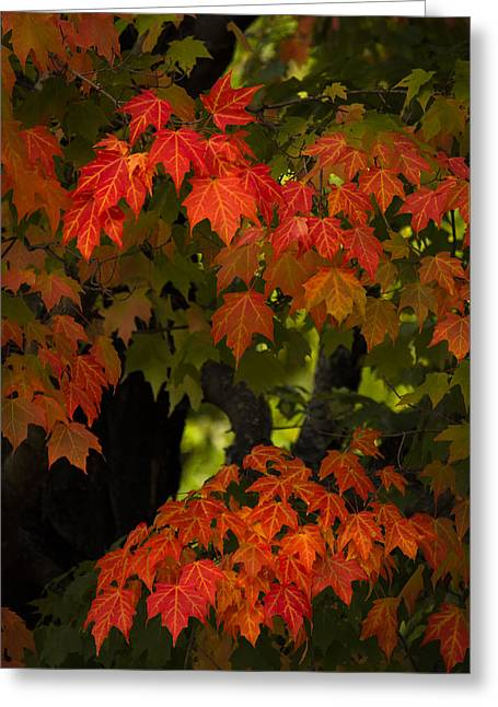Fall Colors Greeting Cards - Feel the change Greeting Card by James Clavet