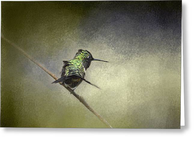 Olive Green Greeting Cards - Feeling Frisky - Wildlife - Hummingbird Greeting Card by Jai Johnson