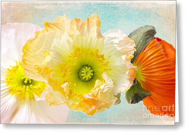 Close Up Floral Mixed Media Greeting Cards - Feeling of summer Greeting Card by Angela Doelling AD DESIGN Photo and PhotoArt