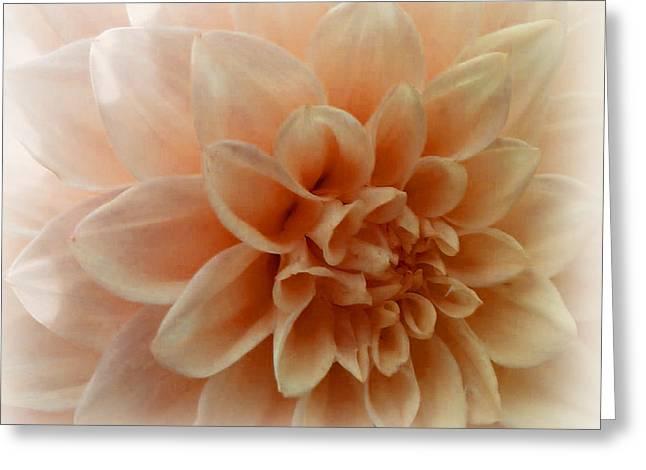 Feeling Peachy Greeting Card by Faye Giblin