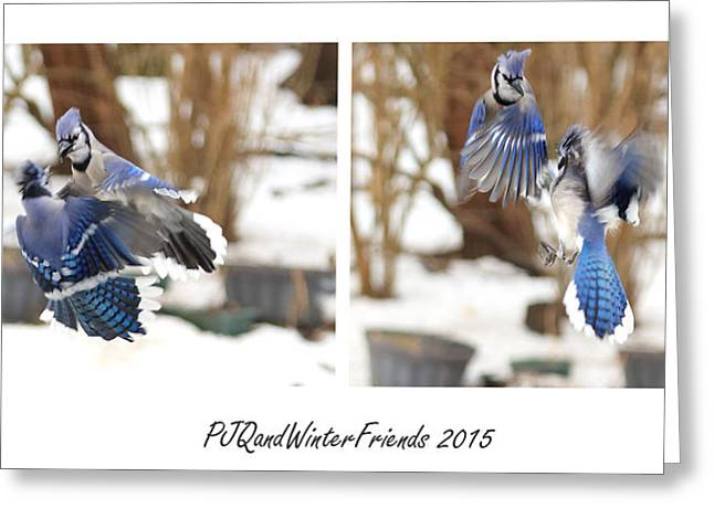 Feisty Greeting Cards - Feisty Blue Jays Greeting Card by PJQandFriends Photography
