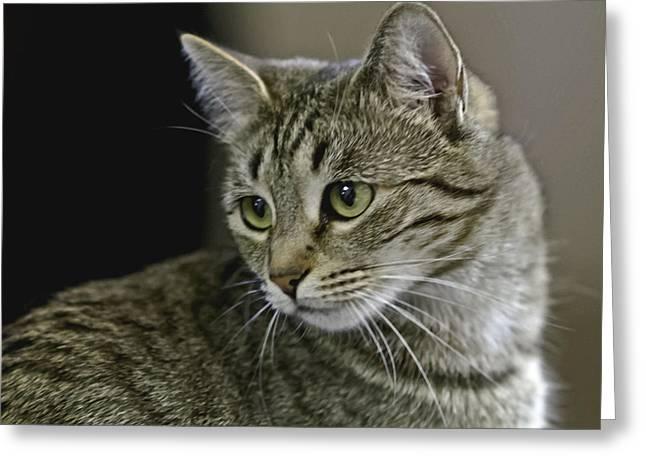 Preditor Greeting Cards - Feline Fatale Greeting Card by Lorraine Harrington