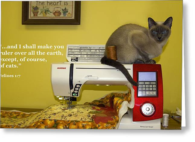 Tonkinese Cat Greeting Cards - Felines Rule Greeting Card by Sally Weigand