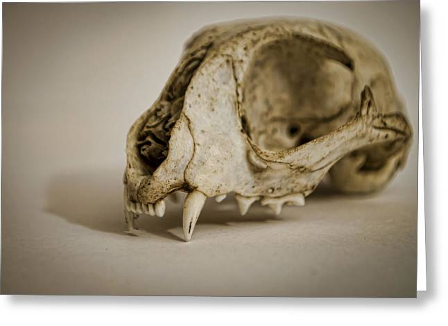 Osteology Greeting Cards - Felis catus Greeting Card by Heather Applegate