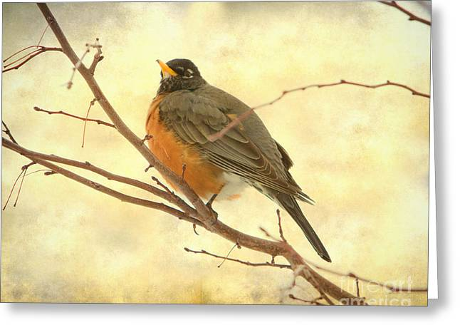 American Robin Greeting Cards - Female American Robin Greeting Card by James BO  Insogna