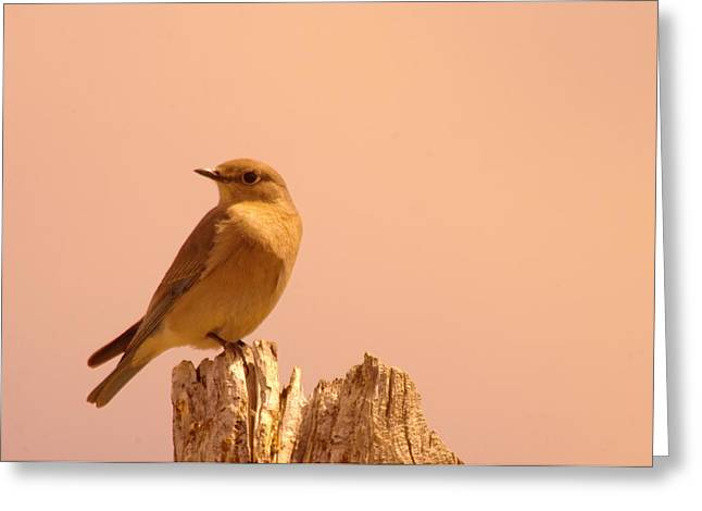 Little Critters Greeting Cards - Female Bluebird Greeting Card by Jeff  Swan